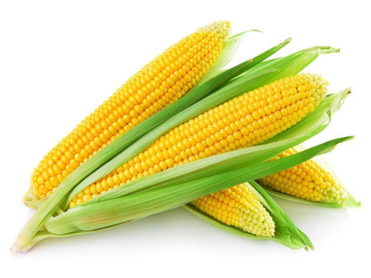 corn-730x548
